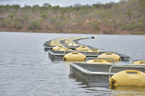 Foto de Piauí investe no desenvolvimento da piscicultura em Dom Inocêncio