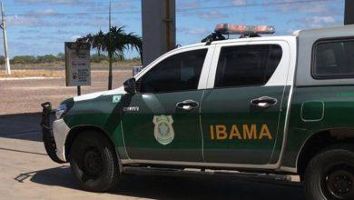 Photo of Ação interestadual do Ibama identifica grupo que comemorou caça de tatus no Piauí